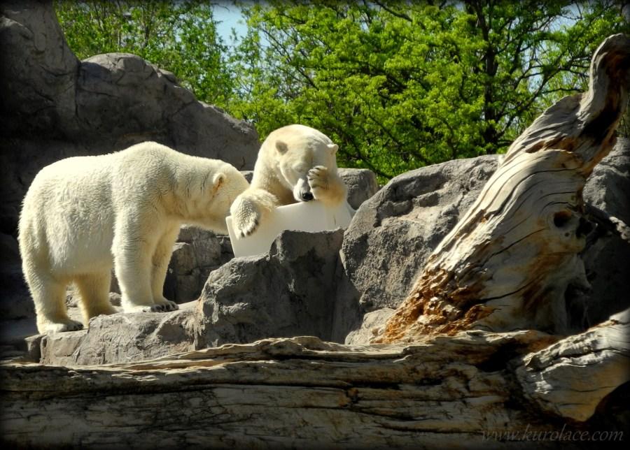 Polar Bear Doh